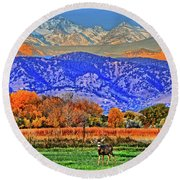 Round Beach Towel featuring the photograph Rocky Mountain Deer by Scott Mahon