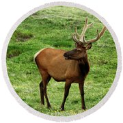 Round Beach Towel featuring the photograph Rocky Mountain Elk 3 by Marie Leslie