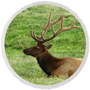 Round Beach Towel featuring the photograph Rocky Mountain Elk 4 by Marie Leslie