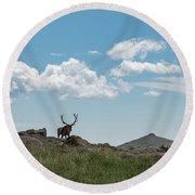 Rocky Mountain Elk Round Beach Towel
