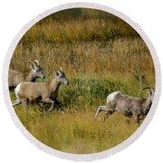 Rocky Mountain Goats 7410 Round Beach Towel
