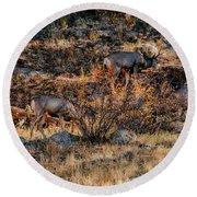 Rocky Mountain National Park Deer Colorado Round Beach Towel