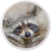 Rocky Raccoon Round Beach Towel