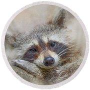 Rocky Raccoon Round Beach Towel