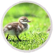 Rogue Duckling, Yanchep National Park Round Beach Towel
