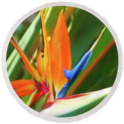 Round Beach Towel featuring the photograph Romantic Skies Bird Of Paradise by Aimee L Maher Photography and Art Visit ALMGallerydotcom