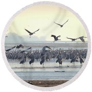 Roosting On The Platte Round Beach Towel