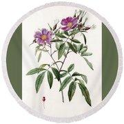 Rosa Hudsoniana Salicifolia Round Beach Towel