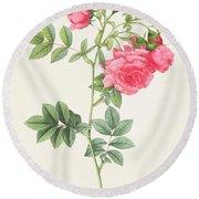 Rosa Pimpinellifolia Flore Variegato  Round Beach Towel