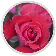 Rose 160 Round Beach Towel by Pamela Cooper