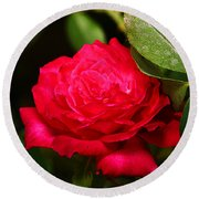 Rose Round Beach Towel by Anthony Jones