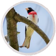 Round Beach Towel featuring the photograph Rose-breasted Grosbeak Looking At You by Ricky L Jones