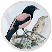 Rose Colored Starling Round Beach Towel