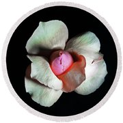 Rose In Bloom Round Beach Towel