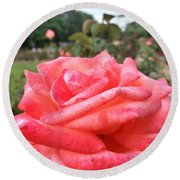 Round Beach Towel featuring the photograph Rose Of Sharon - Faith by Robert Knight