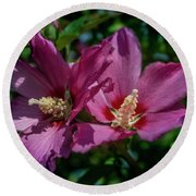 Rose Of Sharon Hibiscus Round Beach Towel by Garry McMichael