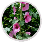 Rose Of Sharon Vine Round Beach Towel