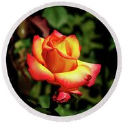 Rose To Remember Round Beach Towel by Dale Stillman