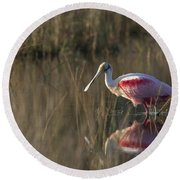 Roseate Spoonbill In Morning Light Round Beach Towel