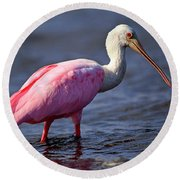 Roseate Spoonbill, Myakka River State Park, Florida Round Beach Towel