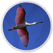 Roseate Spoonbill On The Wing Round Beach Towel by Larry Nieland