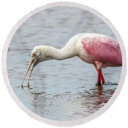 Round Beach Towel featuring the photograph Roseate Spoonbill by Paul Freidlund