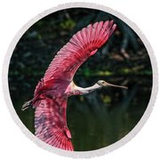 Roseate Spoonbill Round Beach Towel by Steven Sparks