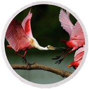 Rosiette Spoonbills Lord Of The Branch Round Beach Towel