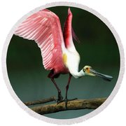 Rosiette Spoonbill Texas Round Beach Towel by Bob Christopher