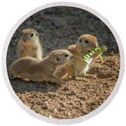 Round-tailed Ground Squirrels 1198 Round Beach Towel