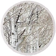 Row Of White Birch Trees Round Beach Towel