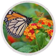 Royal Butterfly Round Beach Towel