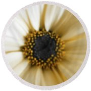 Round Beach Towel featuring the photograph Royal Daisy by Marian Palucci-Lonzetta