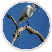 Royal Spoonbill 01 Round Beach Towel