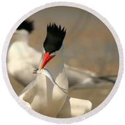 Royal Tern Catch Round Beach Towel