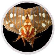 Royal Walnut Moth On Black Round Beach Towel