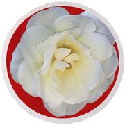 Royal White Rose Round Beach Towel by Daniel Hebard