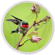 Round Beach Towel featuring the photograph Ruby Garden Hummingbird by Christina Rollo