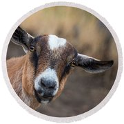 Ruby The Goat Round Beach Towel by Everet Regal