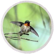 Ruby Throat Round Beach Towel by David Stasiak