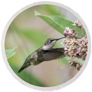 Ruby Throated Hummingbird 2016-1 Round Beach Towel