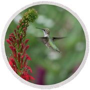 Ruby Throated Hummingbird 2016-4 Round Beach Towel by Thomas Young