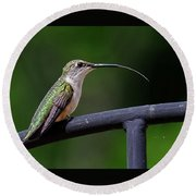 Ruby-throated Hummingbird Tongue Round Beach Towel by Ronda Ryan