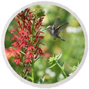 Rubythroated Hummingbird 2016-3 Round Beach Towel by Thomas Young