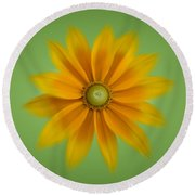 Rudbeckia Blossom Irish Eyes - Square Round Beach Towel