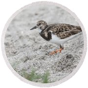Ruddy Turnstone Foraging On The Beach Round Beach Towel