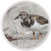 Ruddy Turnstone On The Beach Round Beach Towel
