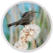 Ruffled Feathers Round Beach Towel by Mike Dawson