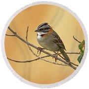 Rufous-collared Sparrow Round Beach Towel