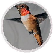 Rufous Male In-flight Round Beach Towel